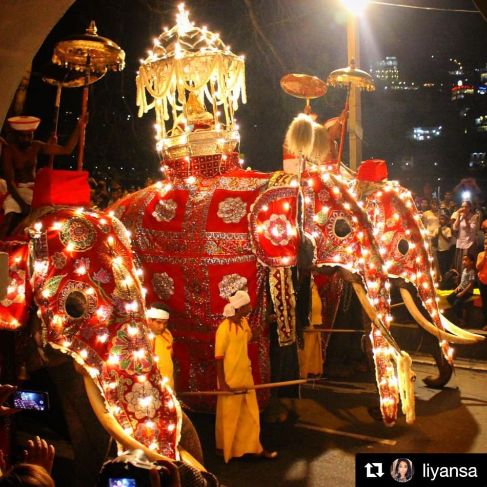 Decorated elephants in procession