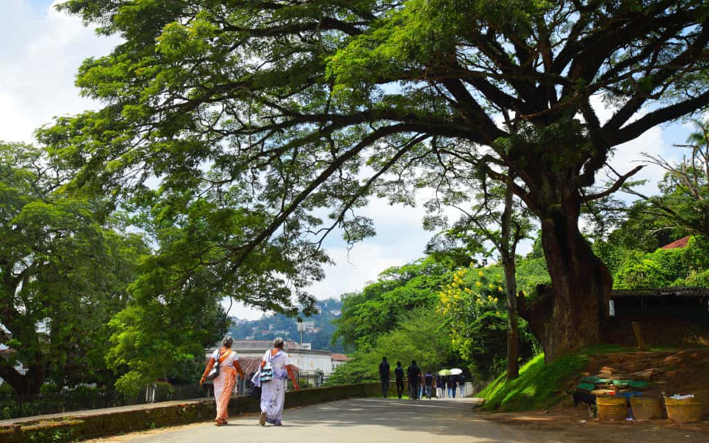 A quiet road in Kandy shaded by a tree