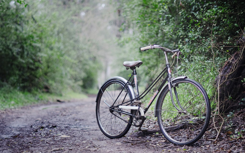 Bicycle parked on a wooded path
