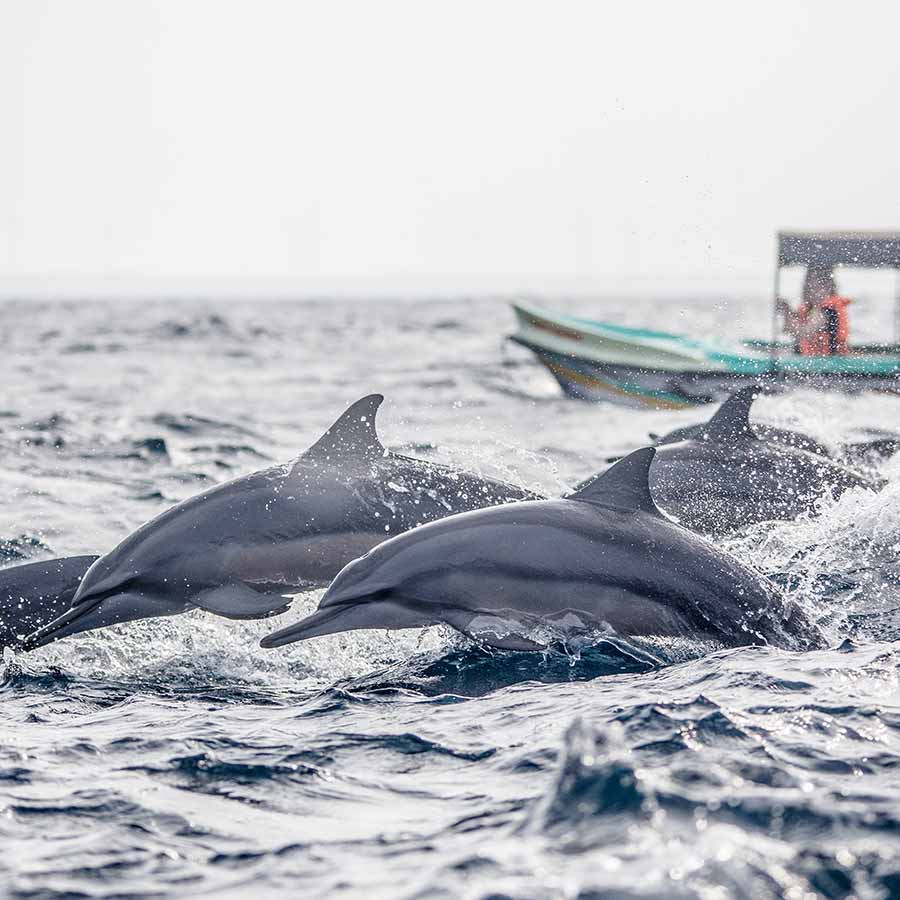 Dolphin Watching in Sri Lanka
