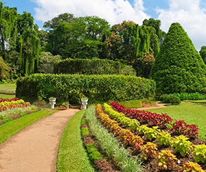 Royal Botanical Garden in Kandy